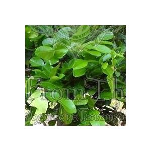 Чистое эфирное масло листьев Кафир Лайма