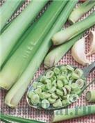 95acac99fbfat1 13.Тайская традиционная медицина и не только