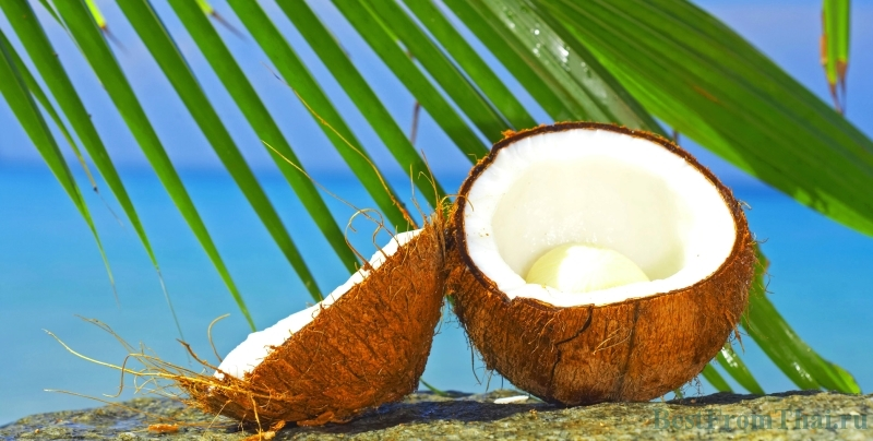 kokos1 ПОЛЕЗНЫЕ СВОЙСТВА КОКОСОВОГО МАСЛА