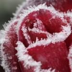 Зимний уход за кожей