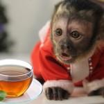 Приглашаем вас на тайское чаепитие!