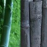 Бамбуковый уголь - полезные свойства и применение