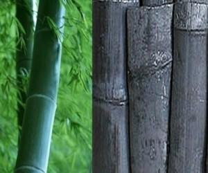 бамбуковый уголь