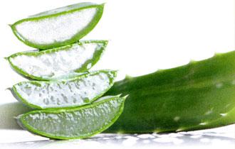 plante aloe vera gel Лечебные свойства Алоэ вера для вашей красоты и здоровья