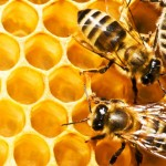 Пчелиный воск в креме : здоровье кожи и суставов.