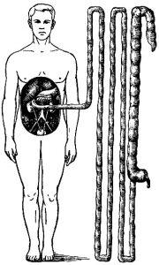 чистка кишечника от шлаков и токсинов