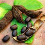 Мукуна Жгучая — лекарство от бесплодия, БАД для мужчин для повышения потенции, препарат от преждевременной эякуляции и средство для повышения либидо
