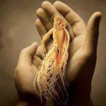 Корень женьшеня — полезные свойства для мужчин и для женщин